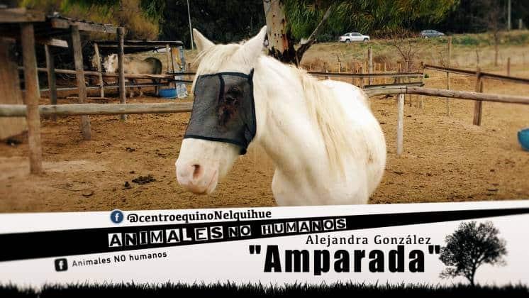 ANH COVER FACEBOOCK CAP 7 AMPARADA0