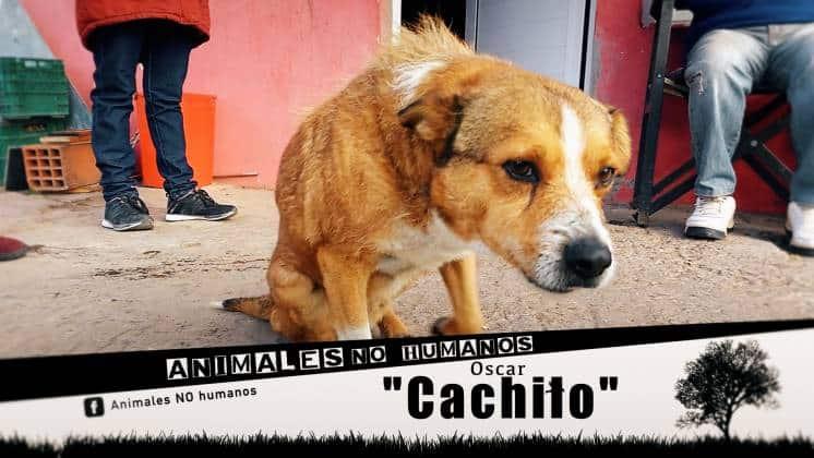 ANH COVER FACEBOOCK CAP 8 CACHILO