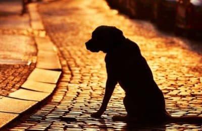 Se conmemora el día mundial del perro