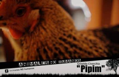 PIPIM