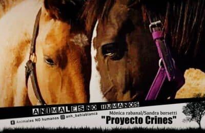 PROYECTO CRINES