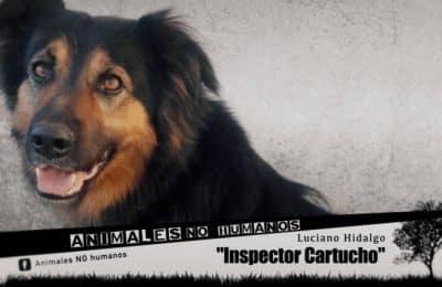 INSPECTOR CARTUCHO