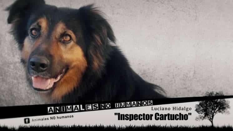 ANH COVER FACEBOOCK CAP 27 INSPECTOR CARTUCHO0