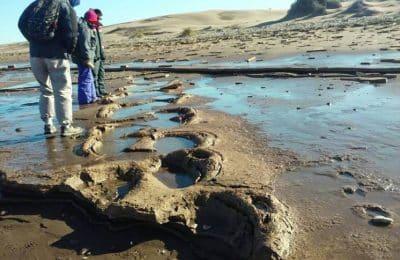 Visitas Guiadas a la Huellas Fósiles Pehuen Có