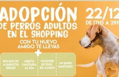 Campaña de adopción: «Para que un Josecito tenga un hogar»