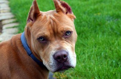 La Legislatura porteña prohibió las mutilaciones estéticas en animales