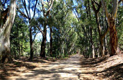 Escapadas de verano: Pehuen Co, una combinación de bosque y playa