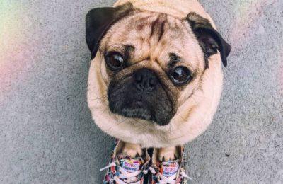 Doug the Pug, el perro más amado por los famosos