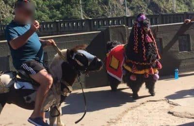 Buscan prohibir el uso de ponis como atracción turística