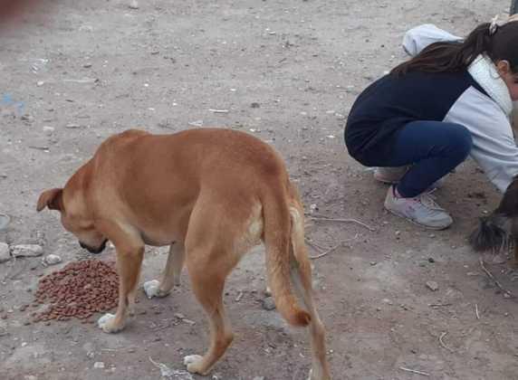 Campaña de alimento balanceado para animales en situación de calle