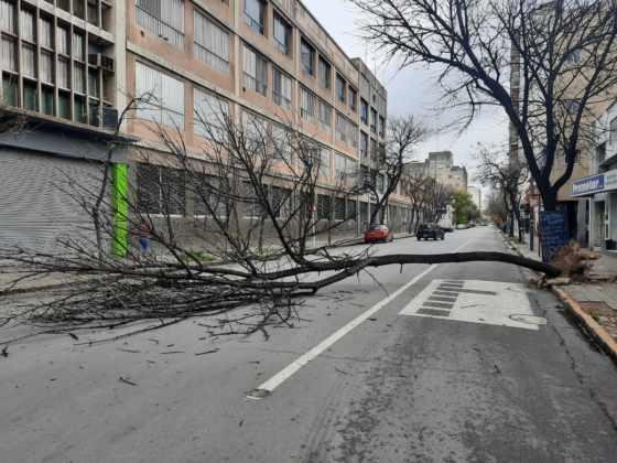No pasó nada de milagro: Se cayó un árbol en Vieytes al 100