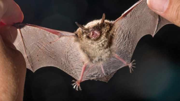 Coronavirus no hay uno solo: encontraron en China cientos de variedades más en murciélagos