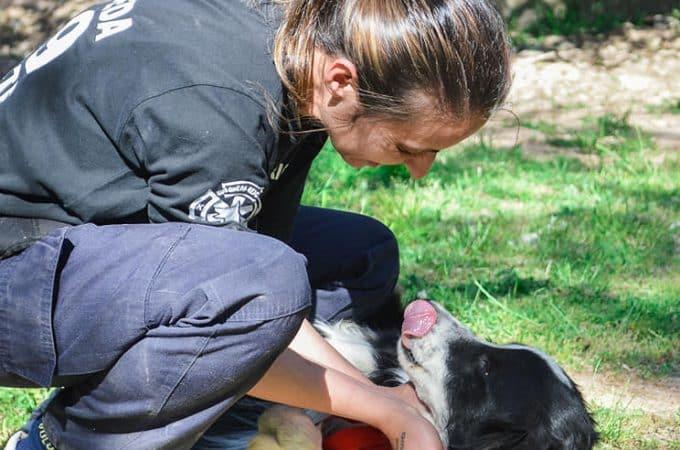 """""""Perrera Cero"""" : Saavedra reeduca perros del refugio para dar en adopción"""