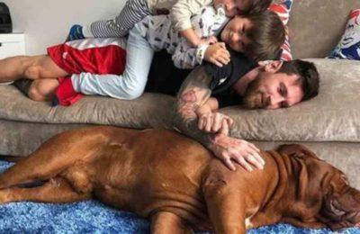 Día del Animal: De las mascotas con fama propia a las mimadas de los famosos