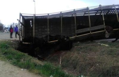 Volcó un camión jaula