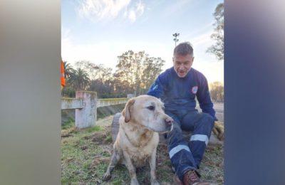 Rescataron a un perro que estaba en el Canal Maldonado