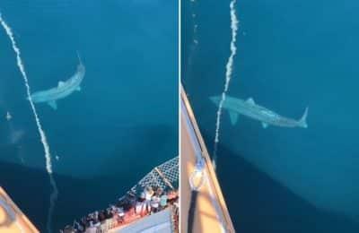 Un grupo de turistas filmó un tiburón desde un barco y el video se hizo viral en TikTok