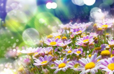 Curiosidades científicas de la primavera que seguro te van a sorprender